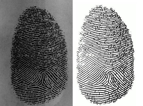 Фильтр Габора широко используют в криминалистика для обработки отпечатков пальцев.