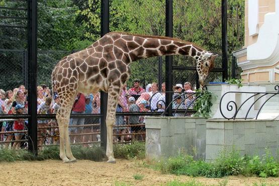 Дом жирафа