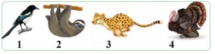 Задача №8 из 21 Расположить животных по скорости передвижения