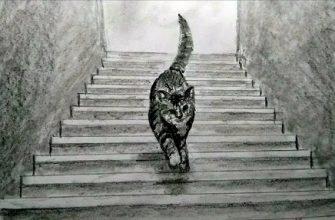"""Тест на шизофрению """"куда идет кот"""""""