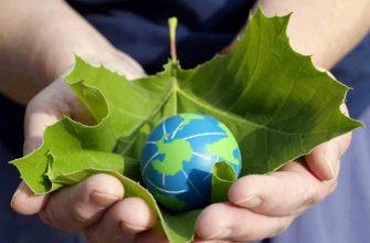 Какие составить вопросы на тему экологии для олимпиады?